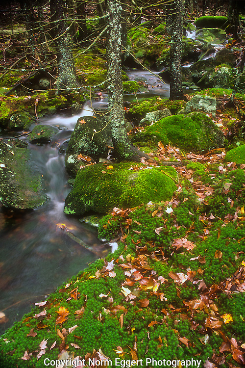 Mossy Brook in southern New Hampshire in the Monadnock Region