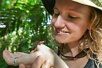 Blue jeans dart frog, Tortuguero, Costa Rica, Central America.