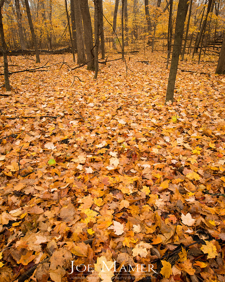 A carpet of fallen leaves covers the forest floor in Spring Lake Regional Park...Located on the north shore of Spring Lake and near the southwest shore of Prior Lake, Spring Lake Regional Park offers 374 acres of incredibly diverse natural habitats.