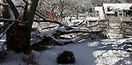 WINSTED, CT04 January 2006-010406TK09 A large tree collapsed from the weight of the snow on 53 Park Place in Winsted resulting in significant damage on parked cars beneath the tree.   Tom Kabelka / Republican-American