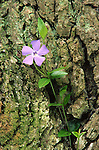PA landscapes Spring, Pennsylvania Wildflowers,