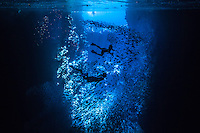 Swimmers chasing large schools of fish in swallows cave. (Photo by Underwater Photographer Matt Considine)
