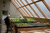 Project participants learn to grow vegetables from seed in the on-site greenhouse.