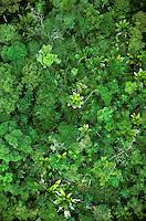 Aerial of floodplain tropical rain forest, Marajo Island, Para, Brazil. Palm with entire leaves is Manicaria saccifera