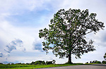 Bethlehem, CT- 06 August 2015-080615CM07-  Country life only please----  A late afternoon sun shines on a tree on Hard Hill Road in Bethlehem on Thursday.  Christopher Massa Republican-American