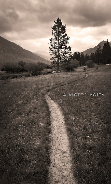 John Muir Trail, Lyell Canyon, Yosemite National Park