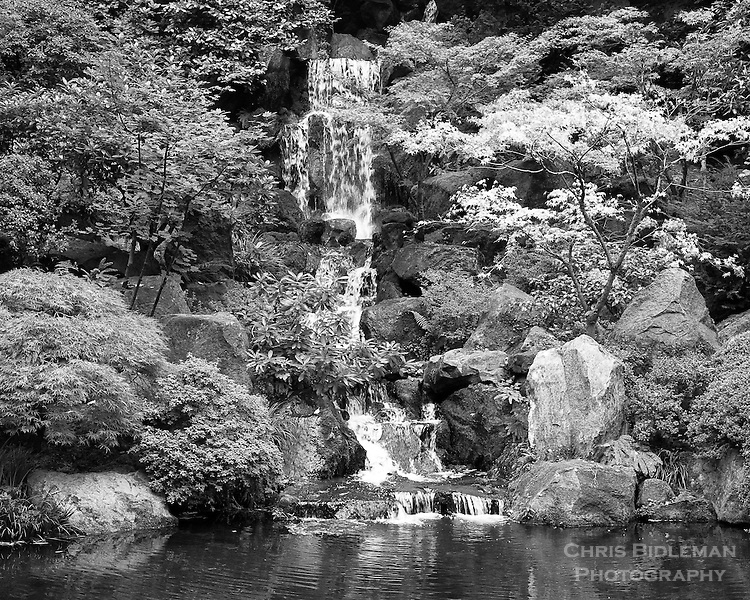 Heavenly Falls in the lower pond strolling garden of the Portland Japanese Garden displayed as a black & white photo