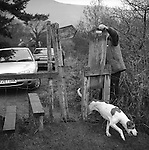 The Blencathra Foxhounds.  A hound finds its way back to the pack. Near Braithwaite, Cumbria. .Hunting with Hounds / Mansion Editions (isbn 0-9542233-1-4) copyright Homer Sykes. +44 (0) 20-8542-7083. &lt; www.mansioneditions.com &gt;