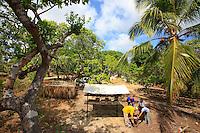 Brazil, State of Pará, São João de Pirabas. Giorgio Venturieri at the apiary belonging to Vilena Fernandes da Silva, a farmer who also grows acai, cashews, lemons, coconuts, coffee, mangoes and other fruits and nuts.