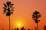Silhouetted palm trees at sunset over looking Los Angeles California USA