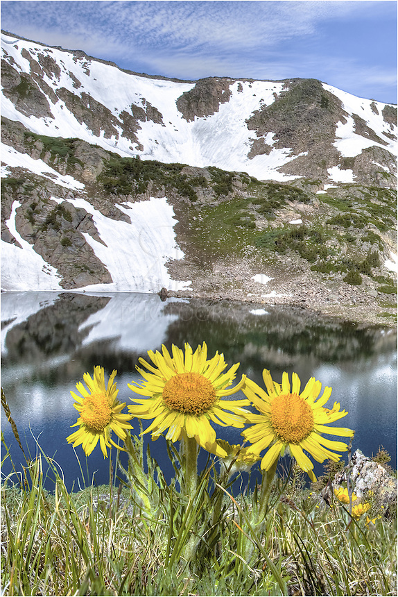 High atop Rollins Pass, sunflowers rest above King Lake. These Colorado wildflowers arise each summer as the winter snows melt.