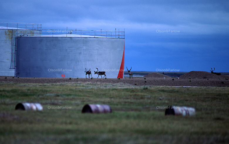 Caribou pass by a fuel tank at a now unmanned Distant Early Warning (DEW) Line radar station. Drums date back to a campsite for oil and gas exploration, closed in 1983.  Lonely is situated 20 feet above sea level on a low lying land mass that extends from the Alaskan mainland between Smith Bay and Harrison Bay.  Two 65,000 gallon diesel oil tanks sit behind a runway.