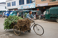 Man transporting young Osmanthus trees by tricycle for traditional tree planting day in Baisha, near Guilin, China