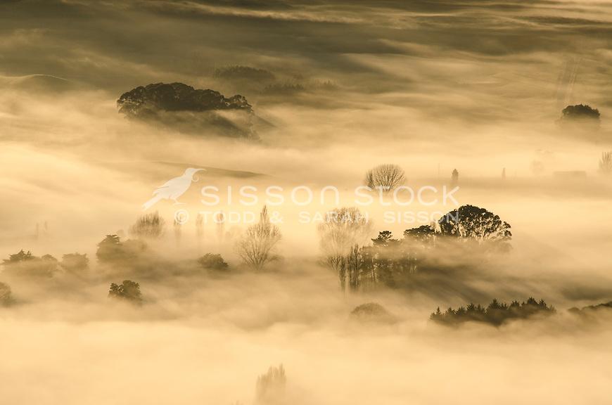 Winter trees cast shadows in morning fog. Tukituki river from Te Mata Peak, Hastings.  Hawkes Bay NZ