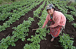 Maria Oralia Jiguan tends her potato crop in Buena Vista Bacchuc, a small Mam-speaking Maya village in Comitancillo, Guatemala. Women in the community have received help with their agricultural projects from the Maya Mam Association for Investigation and Development (AMMID).