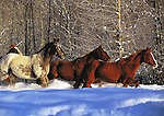 Horses in Winter Holiday Card<br />