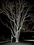 Snow and ice coating trees make them reflective and dramatic after dark, the night the blizzard of February 2010 ended in Rehoboth Beach, Delaware, USA.