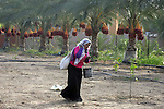 A Palestinian woman gathers bundles of dates harvested from a palm trees during the annual harvest in Khan Younis in the southern Gaza Strip, on September 30, 2015. Photo by Abed Rahim Khatib