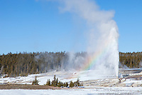 Behive Geyser in the Upper Geyser Basin erupting during winter