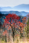 Great Smoky Mountains National Park (Tennessee, North Carolina, Landscapes, Nature, Hiking)