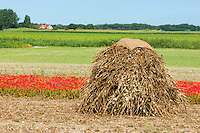 Farmland with a stack of dried poppies