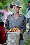 A man harvests corn in the Cambodian village of Pheakdei.
