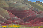 Close view of color contours at Painted Hills National Monument with yellow flowers in bloom. Central Oregon.