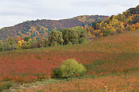 Fall colors on the Blue Ridge Parkway and the Shenandoah National Forest