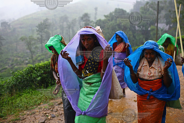 Women protect themselves from the rain at a tea plantation where they work near the village of Elkaduwa. Tea is one of the country's main export crops, with many small holdings, including this one, supported by the International Fund for Agricultural Development (IFAD)...