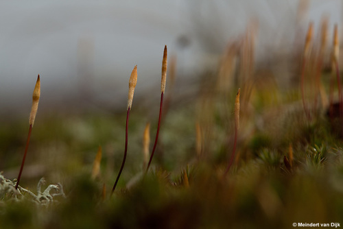 Workshop Natuur- en Landschapsfotografie op Schiermonnikoog.