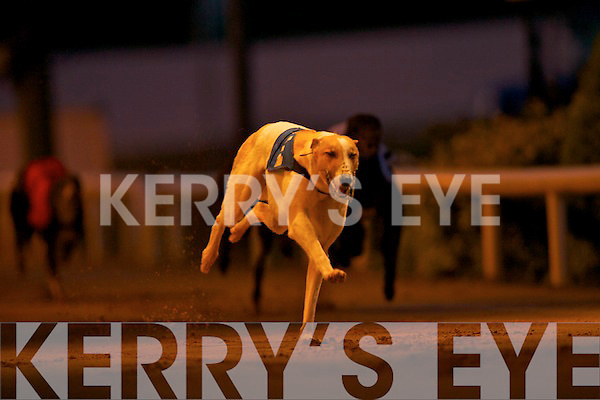 550 FINAL: No. 2 Paradise Santana winner of the Lee Strand 550 Final at the Lee Strand evening of racing at the Kingdom Greyhound Stadium 2nd was No. 3 Crackator John and 3rd was No. 4 Shaws Border.   Copyright Kerry's Eye 2008