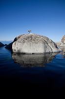 """Bonsai Tree on Lake Tahoe Boulder 1"" - This little pine tree on a island boulder was photographed near Speedboat Beach, Lake Tahoe."