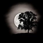 #blackandwhite #monochrome #wisconsin #midwestmemoir #photograph #landscape #B&W #moon #silhouette #wisconsinphotograph #photography #wisconsinphotographer