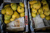 Safeda, a mango variety seen in the wholesale market, Ch. Hira Singh Fruits and Vegetable Market in Azadpur, Delhi, India. Photo: Sanjit Das/Panos