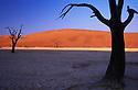 Dead acacia trees in Dead Vlei; Namib-Naukluft National Park, Namib Desert, Namibia