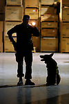 Portland Police K-9 Officer Ray Turney and his dog Bailey conduct training in a SE Portland warehouse which the officers have been given permission to use. They have a great place to train and also act as a crime deterrance.