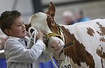 Foto: VidiPhoto<br /> <br /> PUTTEN - De zogenoemde fokveedag, de keuring van de beste melkkoeien van Midden-Nederland, begon zaterdag met een heuse koeienwasstraat. De 160 koeien die door een jury werden beoordeeld, kregen eerst een flinke wasbeurt met een hogedrukspuit en vervolgens werden ze geschoren en gekamd om er tiptop uit te zien in de ring. Er deden 160 koeien en kalfjes mee, aanmerkelijk minder dan vorig jaar. Oorzaak is de IBR-veilig keuring, een strenge gezondheidskeuring om te voorkomen dat dierziekten zich verspreiden. De koeienshow werd georganiseerd door studenten van de agrarische school Groenhorst Barneveld en de Vereniging Veehouderijbelangen Veluwe-IJsselstreek. Het gaat om de mooiste bouw, de beste uiers en de netste presentatie van het vee. De geselecteerde koeien moesten vooral mooi lopen en rustig blijven naast hun begeleider. En dat laatste ging nogal eens mis. Bijna 50 leerlingen van het Groenhorst zijn een half jaar lang bezig geweest met de voorbereidingen van de show of namen ook zelf met een 'eigen' koe deel. De Barneveldse school is tot nog toe de enige in Nederland die zowel een fokveedag mede organiseert alsook er aan deelneemt. Voor agrari&euml;rs is de fokveedag een onderlinge competitie van het mooiste en beste vee, terwijl studenten moeten leren omgaan met de dieren. Voor de kinderen was er een onderlinge competitie met kalfjes.