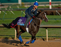 State of Play , trained by Graham Motion and to be ridden by Ramon Dominguez exercises in preparation for the 2011 Breeders' Cup at Churchill Downs on November 1, 2011.