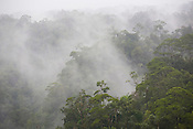 The rainforests of the 'Turama extension' logging concession, near Paia, Gulf Province, Papua New Guinea, Thursday 4th September 2008. These forests are being felled by Turama Forest Industries - a group company of Malayasian logging giant Rimbunan Hijau. Twenty percent of global greenhouse emissions annually are caused by the deforestation of natural forests worldwide.