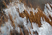 Frozen marsh grasses near the shoreline in Brewster, MA