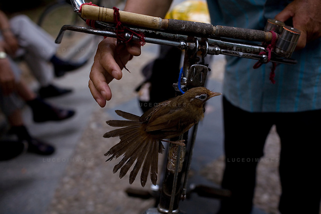 A man tries to catch his pet bird tethered to his bicycle by a piece of string in Yuyuantan Park in Beijing, China on Saturday, August 2, 2008. The city of Beijing is gearing up for the opening ceremonies of the Olympic Games.  Kevin German