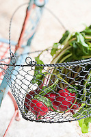 Detail of fresh radishes in a wire basket