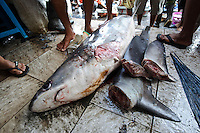 Thresher shark with fins removed for sale at Paotere fish market, Makassar, Sulawesi, Indonesia.