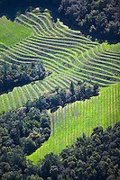 aerial photograph hillside vineyard Napa Valley, California