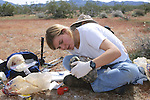 Kathie Working With Desert Tortoise