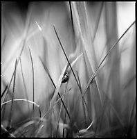 Grass | Black and White