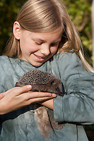 Mädchen, Kind  mit Igel in der Hand, Europäischer Igel im Garten, Erinaceus europaeus, Western hedgehog, Westigel, Braunbrustigel, Hérisson d`Europe de l`Ouest