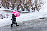 Pink Umbrella in a spring snowstorm