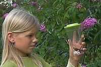 Mädchen beobachtet eingefangenen Admiral, Vanessa atalanta in einen Becherlupenglas, Becherlupe, im Garten, im Hintergrund Schmetterlingsflieder, Buddleja