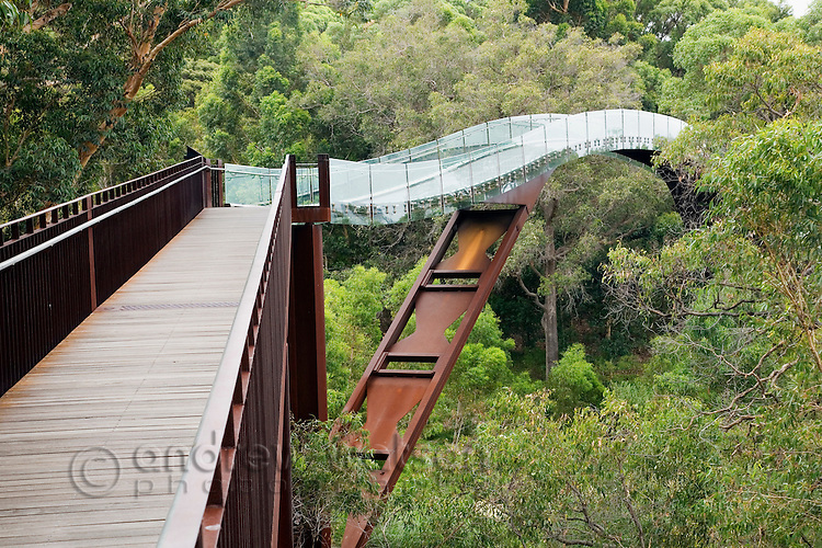 The glass and steel Federation Walkway winds across the treetops in Kings Park.  Perth, Western Australia, AUSTRALIA.